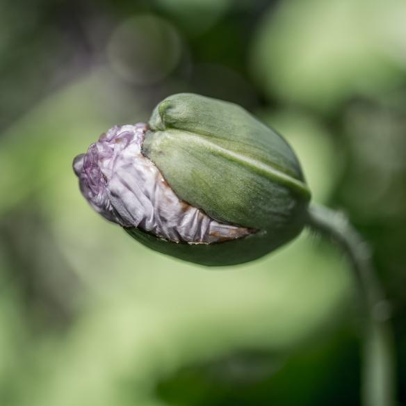 GardenInstinct-RuthB-107.jpg
