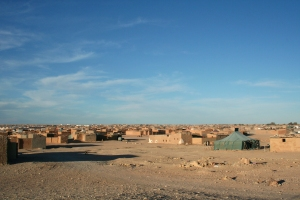 mona-176941-camp-7